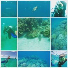Scuba diving and snorkeling in the great barrier reef and swimming with Gorgie the turtle bazaar the barracuda. #greatbarrierreef #Australia #turtles #barracuda #scubadiving #snorkeling #cairns #clearsea by at_02 http://ift.tt/1UokkV2