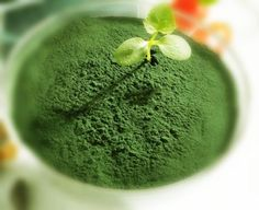 Is spirulina OK for polycystic kidney disease patients? PKD is a genetic kidney disease with multiple kidney cysts on kidneys, and it is a progressive kidney disease, which will finally get into end stage kidney failure with the enlargement Kidney Cyst, Polycystic Kidney Disease, Pkd Diet, Herbal Remedies, Natural Remedies, Wheatgrass Powder, Colon, Wheat Grass, Perfect Food