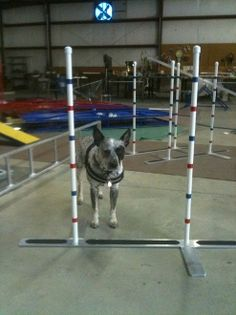dog agility weave pole guides