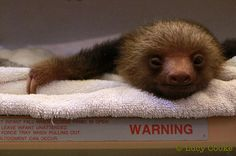 Lucy Cooke: A Bucket of Sloths -- the Perfect Valentine's Gift (