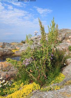 Suomenlahti saaristo, archipelago of the Finnish Gulf, Finland Archipelago, The Great Outdoors, Lighthouse, Natural Beauty, Coastal, Scenery, Hiking, Calm, Friends