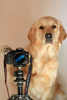 """Smile""    by VeryViVi, via Flickr"