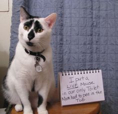 An epic gallery of cat shaming pictures that prove these cats are the naughtiest in the world. A hilarious cat shaming picture gallery. I Love Cats, Crazy Cats, Cool Cats, Cat Shaming, Public Shaming, Funny Animal Pictures, Funny Animals, Cute Animals, Funniest Animals
