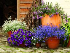 Patio Garden - love the blue!
