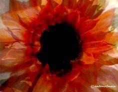 Vanity flower... #AntonioMaia