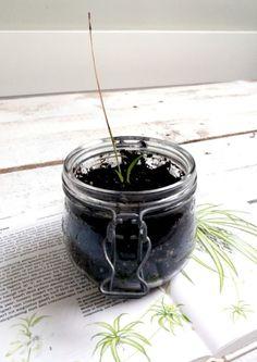 BLOG -  Stekje van de kleuterjuf!   Mevrouw Monstera #stekje #planten #plants #kamerplant #urbanjungle #chlorophytum #groeninhuis #plantlove Chlorophytum, Plants, Blog, Blogging, Plant, Planets