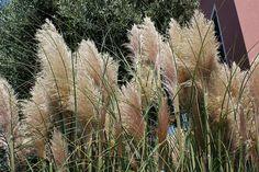 Las plantas autóctonas más lindas - Blogs lanacion.com Cactus Planta, Flora, Green, Plants, Outdoor, Facebook, Garden, Uruguay, Hanging Flowers