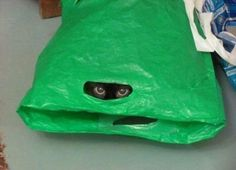 Where there is an empty bag there will be a cat in it