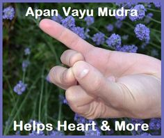 Heart Help - Mudra Apan Vayu... go to balancedwomensblog to find out more