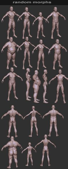 3D Human Body Types - Zbrush Models