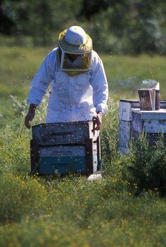 BeeWeaver Apiaries...natural, chemical-free beekeeping from Texas