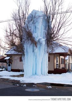 methinks the ice covering this tree had a helping hand!