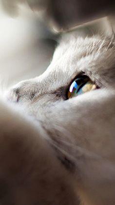 White cat.. i miss..i'm sorry.. I accidentally. padahal baru tadi malam da lia nn bermain & ba usil