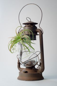 Vintage - Air Plant with Hurricane Lamp