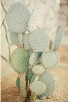 Minty Cacti