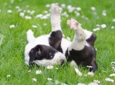 Springtime Safety for Dogs