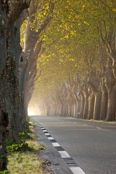 Saint Remy Trees Photograph