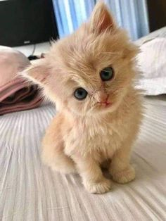 Baby Animals Super Cute, Cute Baby Cats, Cute Little Animals, Cute Funny Animals, Cute Kitty, Baby Pets, Kittens Cutest Baby, Baby Kitty, Funny Animal Pictures