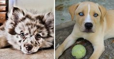 20+ Crossbreed Dogs That Will Make You Fall In Love With Mutts | Bored Panda