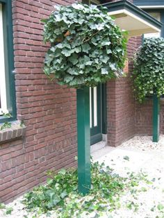 A completely new system for climbing plants. maintenance friendly. The planting (HEDERA) stands with its roots in the solid ground. there is no earth in the column itself. The pillar can be finished with a zinc cap or a square or pyramid wire grid. Made by Hivy Pillar Greenfashion (HPG) www.hivypillar.nl Made in Holland.