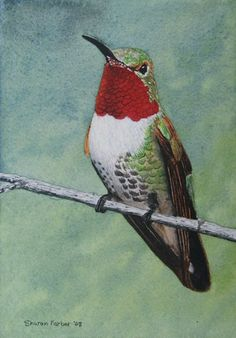 Hummingbird watercolor painting by painted path, via Flickr