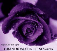 Mis bellas imagenes - Bonita rosa violeta