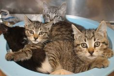 The Bubbly family: Time running out for super cute kittens at high-kill shelter
