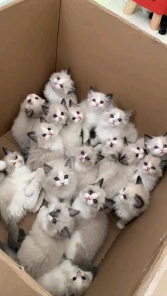 Baby Animals Pictures, Cute Animal Photos, Cute Animal Videos, Funny Cute Cats, Cute Cats And Kittens, Cute Funny Animals, Kittens Cutest Baby, Silly Cats, Funny Pets