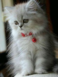 #Gatito #peludo muy chiquitín ;) #Soydegato