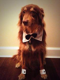 And his more formal tuxedo look: | Amanda Seyfried's Dog Is America's Hidden Treasure