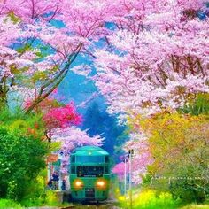 ✿.*・nao・*.✿ (@princess.nao) • Fotos y videos de Instagram Wonderful Picture, Wonderful Places, Japan Sakura, Cherry Blossom Japan, Pink Nature, Biblical Art, Natural Wonders, Wonders Of The World, Cool Photos