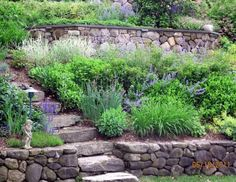 Front Yard Garden Design Traditional Residential Steep Slope Landscaping Design, Pictures, Remodel, Decor and Ideas - page 3 - Terraced Landscaping, Landscaping On A Hill, Landscaping With Rocks, Backyard Landscaping, Landscaping Ideas, Terraced Garden, Steep Hillside Landscaping, Backyard Ideas, Patio Ideas