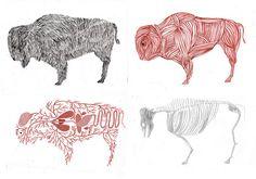 stripped buffalo by kaye blegvad, via Flickr