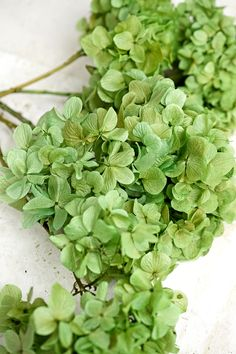 Add a lovely hint of nature to your centerpieces with these preserved green hydrangeas