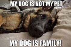 """Click visit site and Check out Best """"German Shepherd"""" T-shirts. This website is superb. Tip: You can search """"your name"""" or """"your favorite shirts"""" at search bar on the top."""