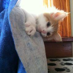 Peek A Boo!!