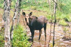 Mrs Moose