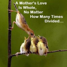 A mother love is whole no matter how many times divided. - Author Unknown