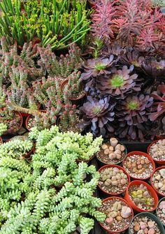 Google Image Result for http://blog.wabisabigreen.com/hp_wordpress/wp-content/uploads/succulent-gardening.jpg