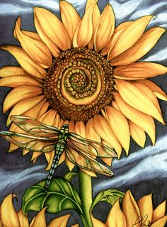 Dragonfly & Sunflower by Claudia Tremblay Claudia Tremblay, Sunflower Art, Sunflower Sketches, Sunflower Illustration, Sunflower Clipart, Sunflower Pictures, Sunflower Garden, Sunflower Tattoos, Dragonfly Art