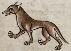 """Medieval Bestiary : Badger Gallery  """"A very elegant badger, looking more like a fox or a dog."""""""