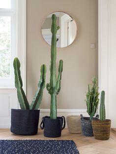 Cactus Plants, Store, Cacti, Cactus, Business