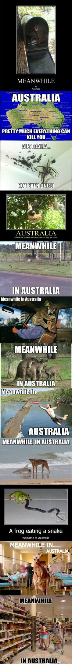 Meanwhile in Australia...  Some of them are really bad photoshop, but they're still funny :)