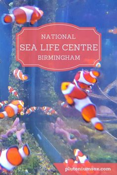 National Sea Life Centre | Birmingham, West Midlands. If you are looking for a day out in the West Midlands for children of any age, the National Sea Life Centre in Birmingham would be a great option, particularly for a rainy day. There are fish, penguins