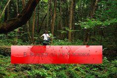 AOKIGAHARA- El Bosque de los suicidias 100 muertes al año.    AOKIGAHARA  El Bosque de los suicidios  Porque elegirlo ?  Cosas sobre Bosque El suicidio de Japón  Noroeste del majestuoso Monte Fuji es el extenso 22 km cuadrados de Aokigahara un bosque tan espeso follaje que se le conoce como el Mar de Árboles. Pero es este terrible estigma japones que hizo el bosque un lugar apropiado para la película de terror tan espeluznante como El Bosque. Visitantes incontables eligieron este lugar…