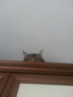 Who s there
