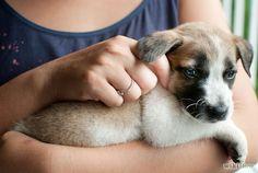 Aprende a educar a un cachorro para que no muerda vía es.wikihow.com