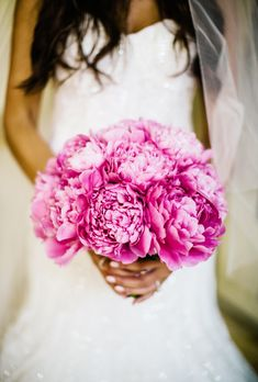 Hot pink peonies. Emphasis on hot