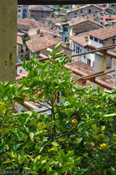 Lemons and red rooftops in Limone, Lake Garda (Italy) - Learn more about Limone sul Garda in my blog post! #lakegarda #gardasee #lagodigarda #lombardy #lombardei #lombardia #italien #italia #travelblog #travelblogger #reisen #traveltips #reiseblog #breakfast #italian  #slowlife #slow #slowtravel #lake #landscape #reisetipps #travelersnotebok #urlaub #ferien #vacation #vacances #vacaciones