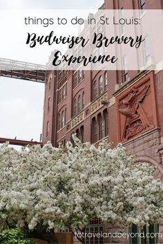 Things To Do In St Louis: Budweiser Brewery Tour